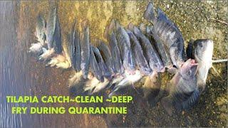 TILAPIA CATCH CLEAN DEEP FRY* Quarantine Groceries