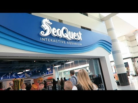 SeaQuest Interactive Aquarium inside The Boulevard in Las Vegas | #TheBoulevard