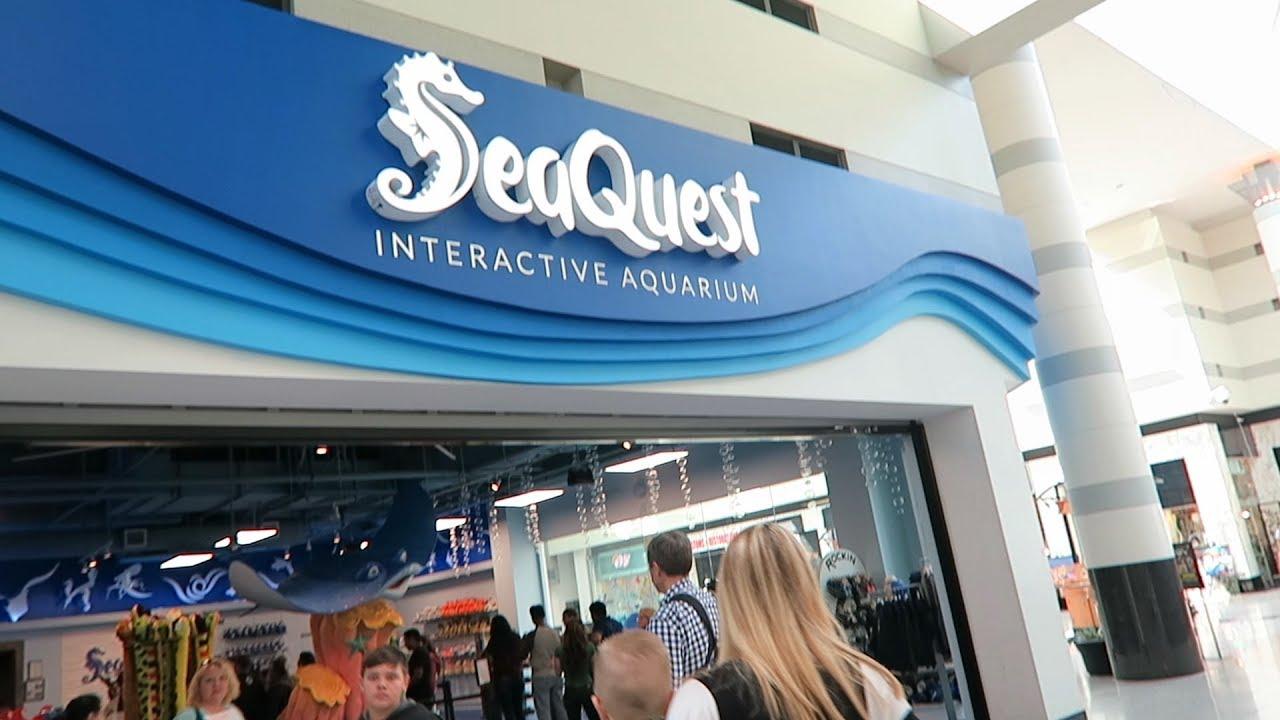 Seaquest Interactive Aquarium Inside The Boulevard In Las Vegas Theboulevard