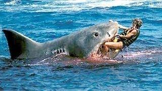 Shark Attacks surfer at Australian beach Real or fake