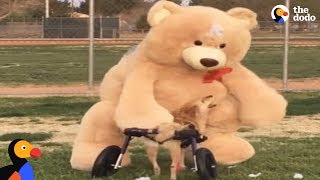 Dog Meets Favorite Life Sized Toy | The Dodo