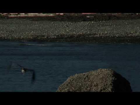 Kingston beaches wildlife, Puget Sound  HD