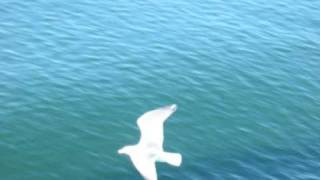 Jason Upton - Fly - Legendado em Português