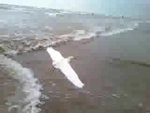 Tsunami in Long beach....terrible!!!!!!!