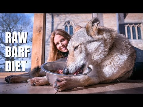 RAW FOOD FOR DOGS - THE BARF DIET / Animal Watch