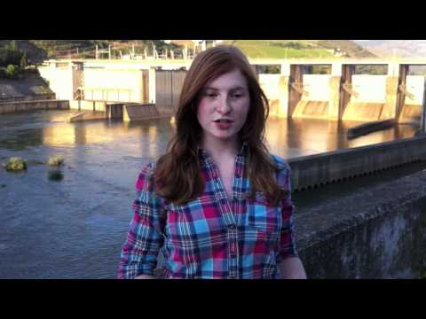 Portugal and Renewable Energy- Expat Youth Scholarship Submission- Moriel Levy