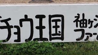 ダチョウ王国 袖ヶ浦ファームに行ってきた (千葉県)