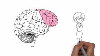Chiropractic Research: Prefrontal Cortex