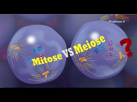 La diff rence entre la mitose et la m iose youtube for Difference entre pyrolyse et catalyse