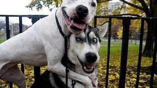 САМЫЕ СМЕШНЫЕ СОБАКИ 2015 - Лучшая Подборка #24 - Прикольные и Весёлые Собаки - ДО СЛЁЗ
