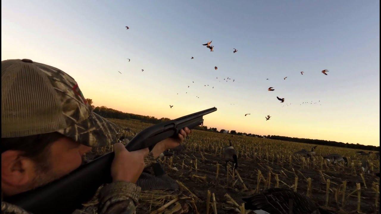 best canada goose gun