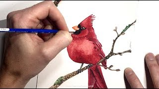 How to Paint a Cardinal Bird & Tips on Painting the Color Red in Watercolors