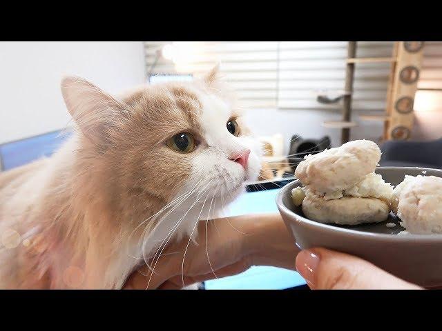 음식 훔치기에 재미들린 디디 고양이, 치킨 마카롱
