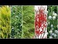 Five Plants For Winter Interest! 🌲❄️// Garden Answer