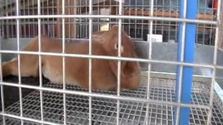 Red New Zealand Rabbitry 4/9/14, Waterl Bottles, New Babies & Cage Layout Complete
