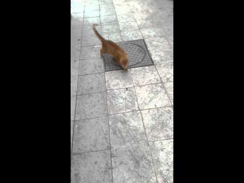 Funny Cat Vs Cockroach