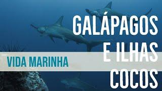 Tubarões, peixes, golfinhos e toda a vida marinha em Galápagos e Ilhas Cocos estão mesmo protegidas?