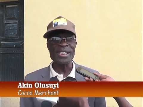 Fall in Cocoa Price: Implication on Farmers and Economy