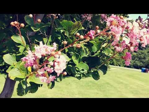 Cylburn Arboretum #1