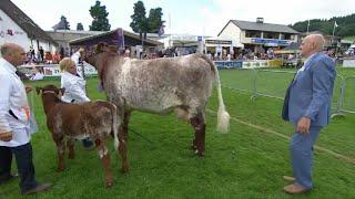 Pencampwriaeth Gwartheg Byrgorn | Shorthorn Cattle Championship