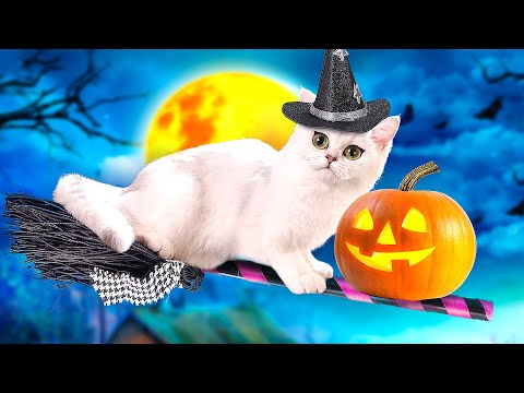 CATS TRICKS and TREATS TALES