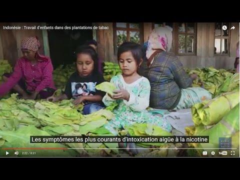 Indonésie : Travail d'enfants dans des plantations de tabac
