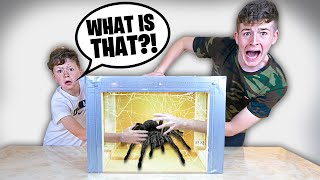 What's In The Box  FAMILY 4 CHALLENGE (Insects, Live Animals, Scorpions...)
