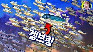 겸손한 물고기 멸치의 지구 정복 대모험!! - 피드 앤 그로우 피쉬 - 겜브링(GGAMBRING)