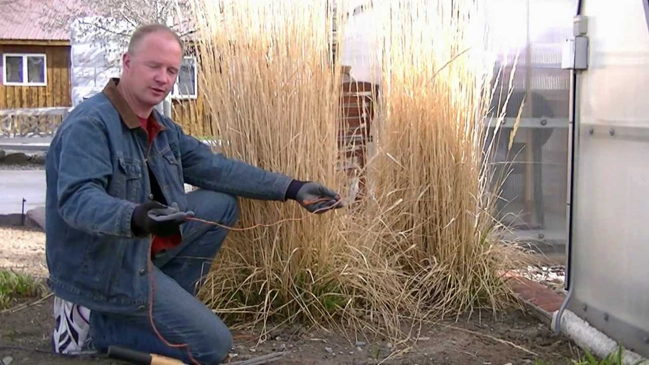 Pruning ornamental grasses youtube workwithnaturefo
