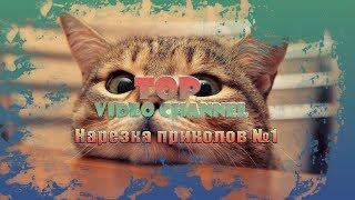ПОДБОРКА ПРИКОЛОВ Смешные животные НАРЕЗКА видео приколов с животными
