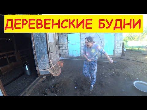 Деревенские будни / Продали цыплят / Семья в деревне