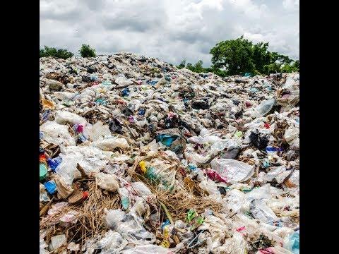 LWMC disposes 16,000 ton animal waste