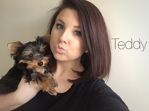 Meet Our Yorkshire Terrier Teddy + New Puppy Essentials!!