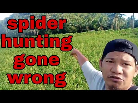 Spider hunting gone wrong 🤔