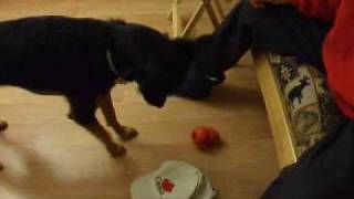 Teaching Object Recognition To Your Dog: Naming Objects With Clicker Training