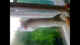 кот любит мыть окна