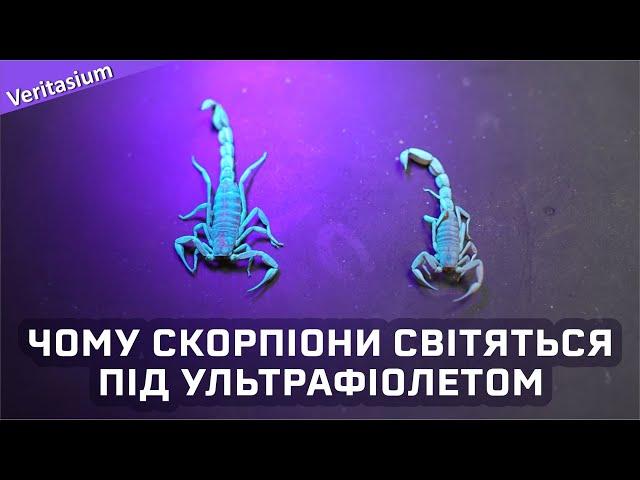 Чому скорпіони флуоресціюють [Veritasium]