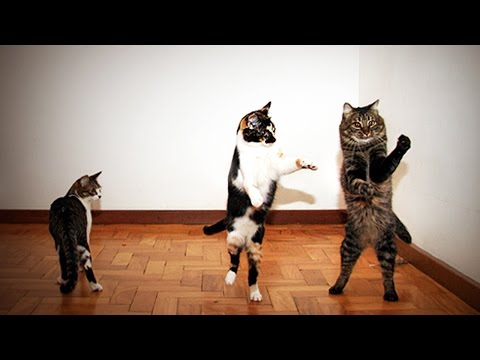 Pets Dancing 😹  Funny Animals Dancing 😂 [Funny Pets]