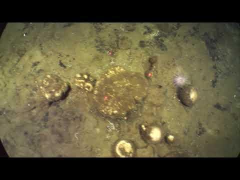 Sponge Trails on the Seafloor