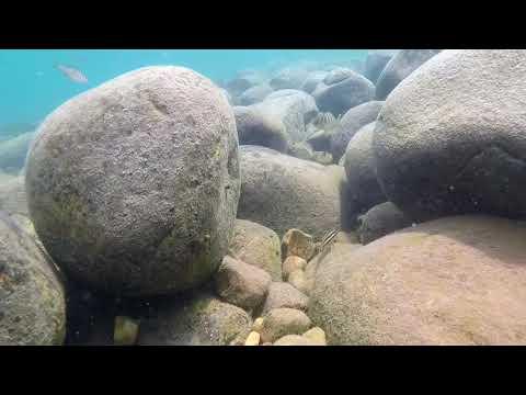 Swimming With Cichlids - Julidochromis Ornatus & Telmatochromis  Vittatus   Kasakalawe