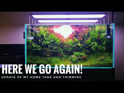 MY HOME TANK | HERE WE GO AGAIN!