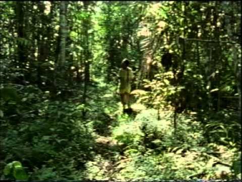 Amazon rainforest documentary