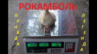 видео Чеснок Рокамболь