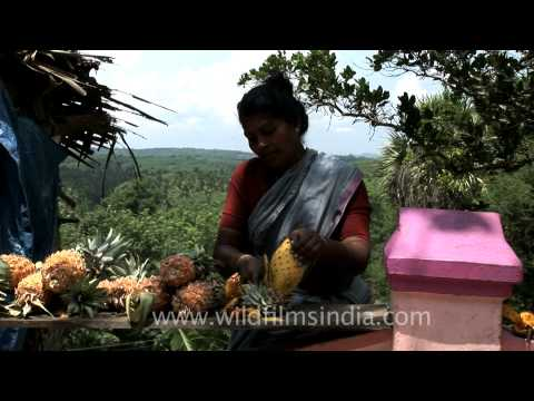 This lady cuts pineapples for tourists at Thotti Palam