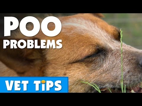 How To Help Your Dog Overcome Constipation