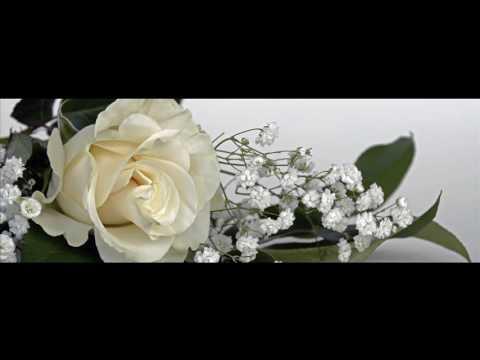 Белая роза медицинский центр. Отзыв
