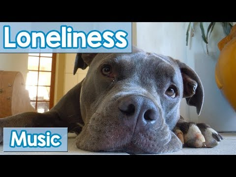 Music for Lonely Dogs! Keep Your Dog Company with this Relaxing Music for Loneliness in Dogs! - NEW!