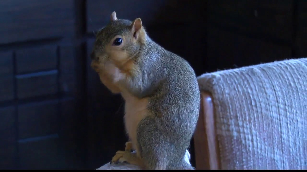 10 Terrifying Tales Of When Squirrels Attack - Listverse