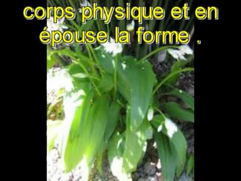 le corps astral
