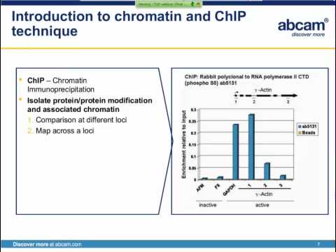 Chromatin Immunoprecipitation (ChIP) principles and troubleshooting